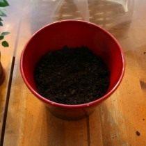Заполните оставшийся объем горшка грунтом