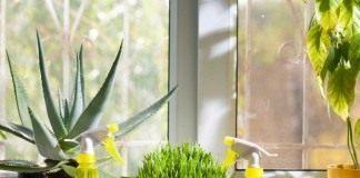 Самый простой и популярный метод увлажнения воздуха — использование опрыскиваний