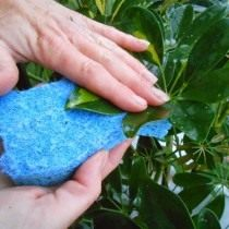 Очистка листьев от пыли и загрязнений
