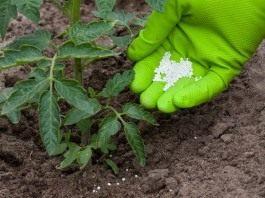 Внесение минеральных удобрений под томат