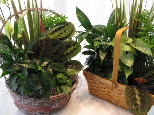 Букетная композиция из комнатных растений