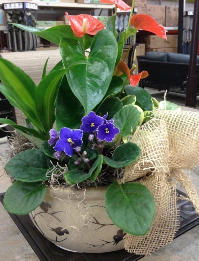 Букет из комнатных растений