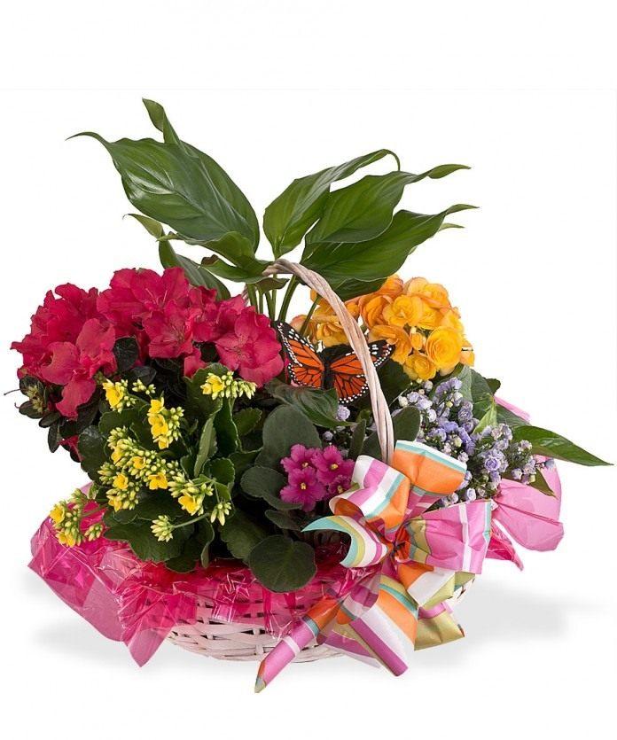 Букеты из домашних цветов своими руками фото 57