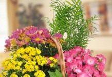 Комнатные растения в качестве живого букета