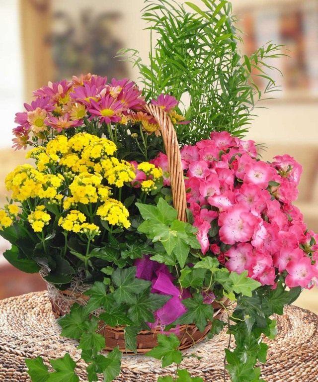 Подарочная корзина с комнатными цветами