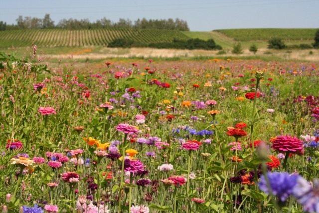 Цветы и разнотравье, как пример мавританского газона