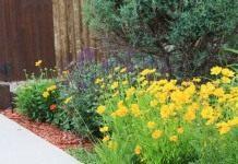 Цветник с многолетниками, цветущими всё лето