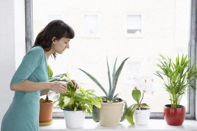 Внекорневая подкормка растений