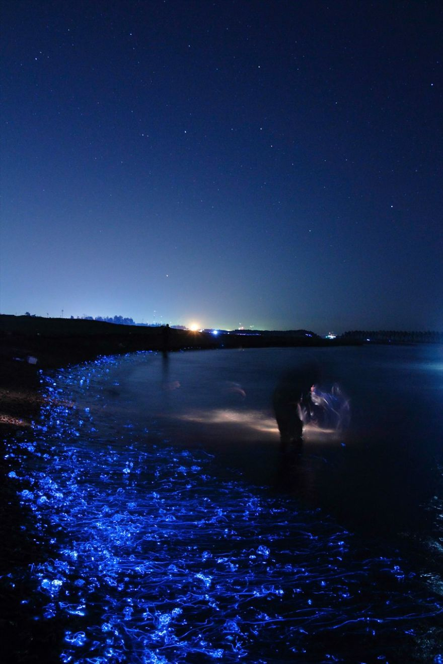 i-captured-the-mysterious-glowing-sea-in-japan__880