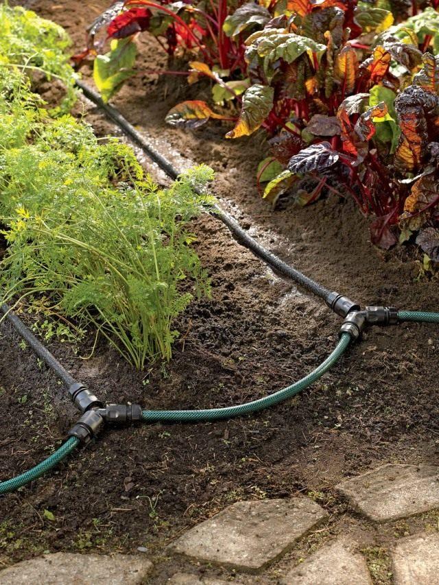 Полив огорода с помощью системы капельного полива