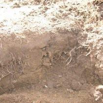 Выкапываем яму для посадки агрессивных растений