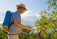 Летние болезни ягодников и плодовых культур