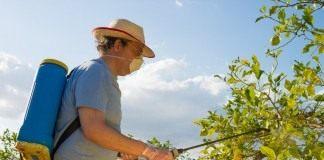 Летняя обработка сада от болезней