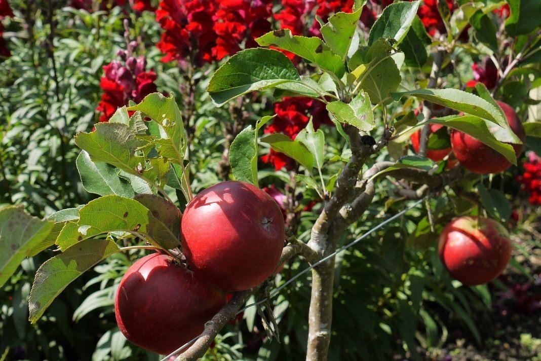 Чем подкормить клубнику осенью Лучшие удобрения