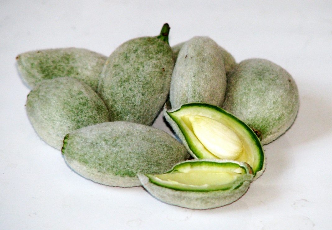 Green_almonds