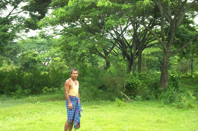 Molai-forest-2