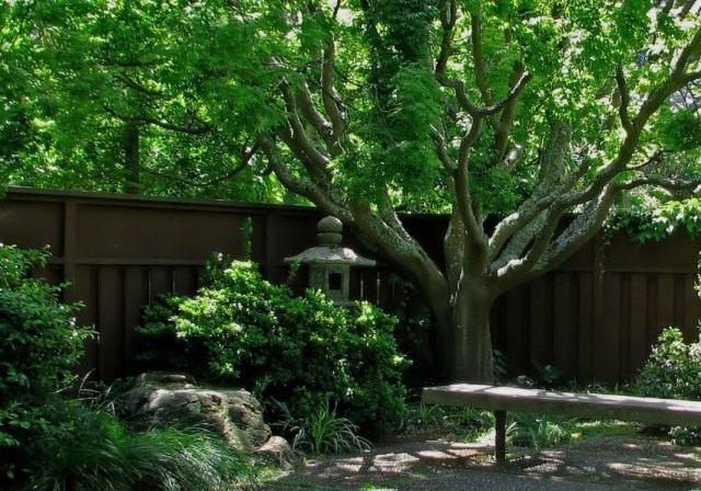 Дерево в саду японского стиля