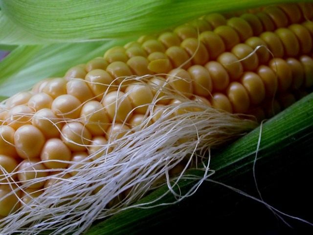 Кукуруза сахарная, также маис (Zea mays)