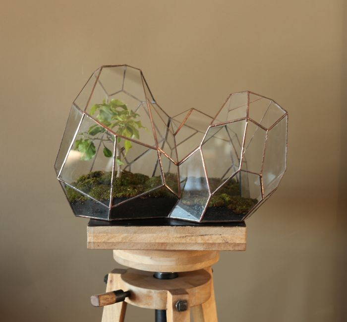 Terrariums-Reimagined-02
