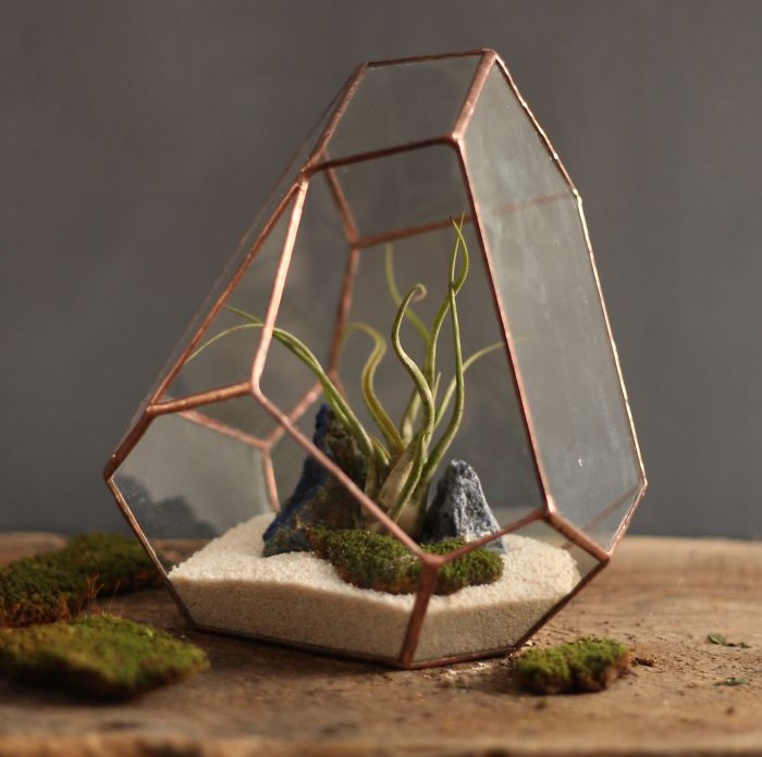 Terrariums-Reimagined-03