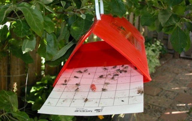 Клеевая ловушка от насекомых вредителей