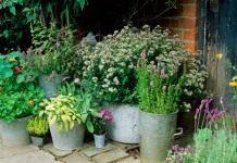 Контейнерные растения перед переносом в помещение