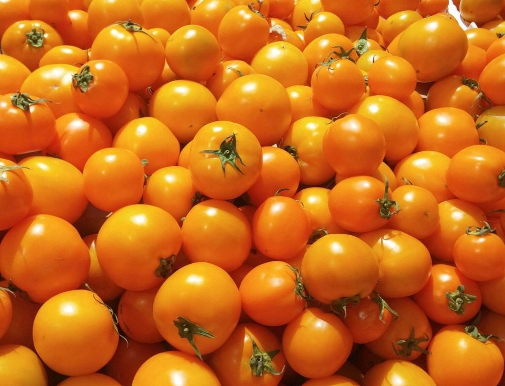 golden_tomatoes