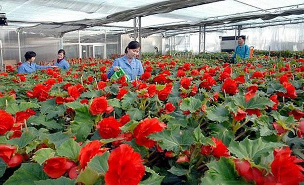 jongillia-greenhouse