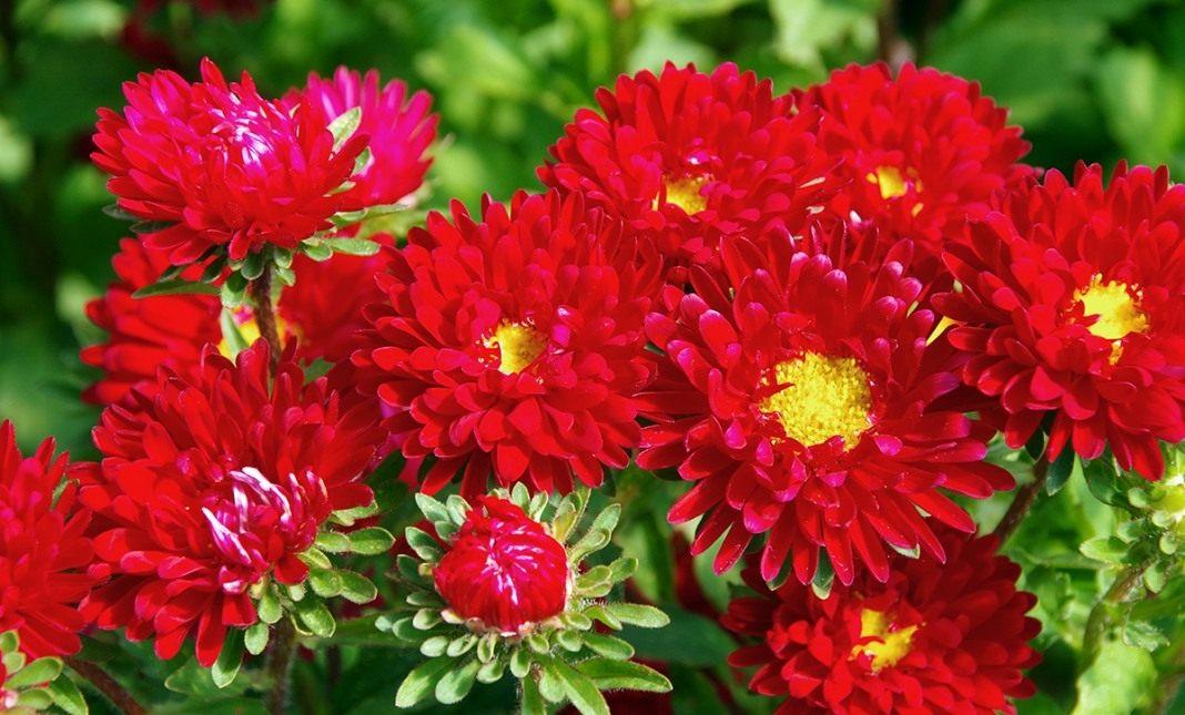matsumoto-red