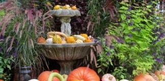 Осенний урожай тыкв