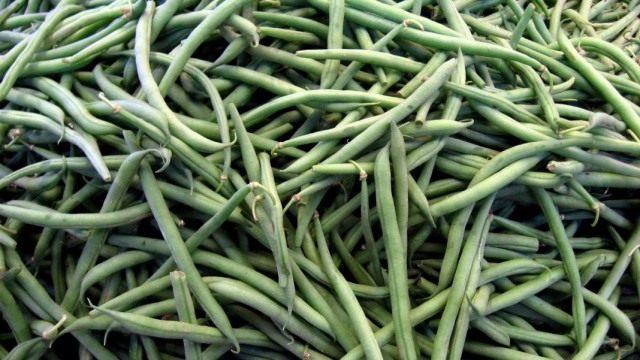 Стручки зелёной фасоли