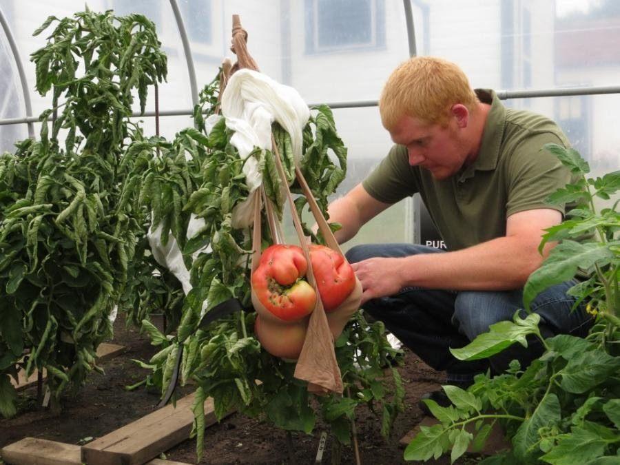 big-tomato2
