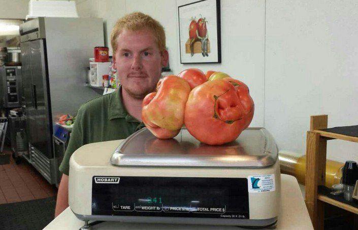 big-tomato3