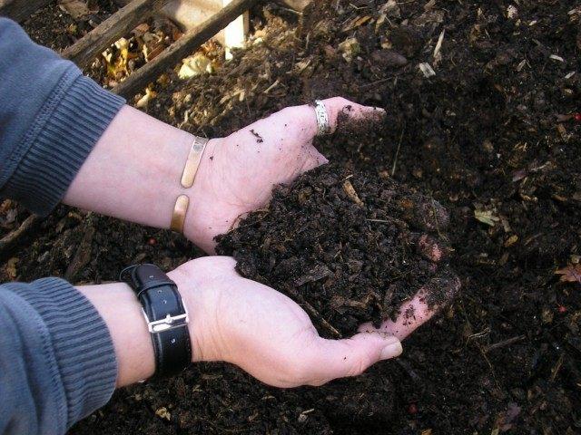 Компост как органическое удобрение