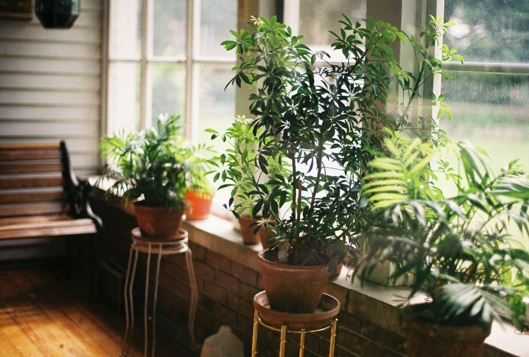 Комнатные растения: как правильно подготовить их к зиме изоражения