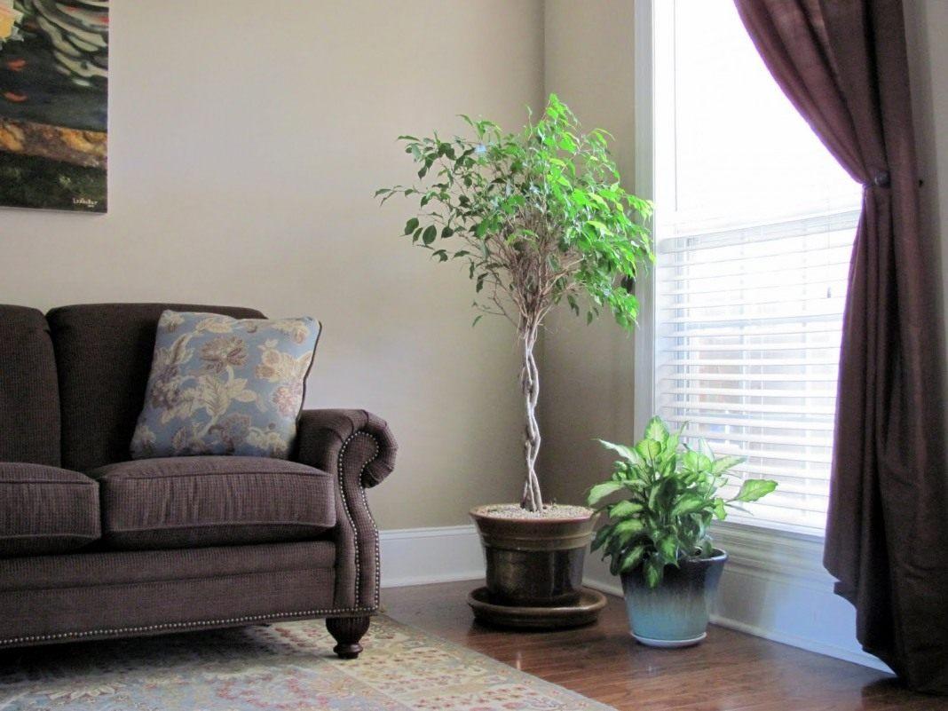 Напольные цветы в интерьере гостиной фото