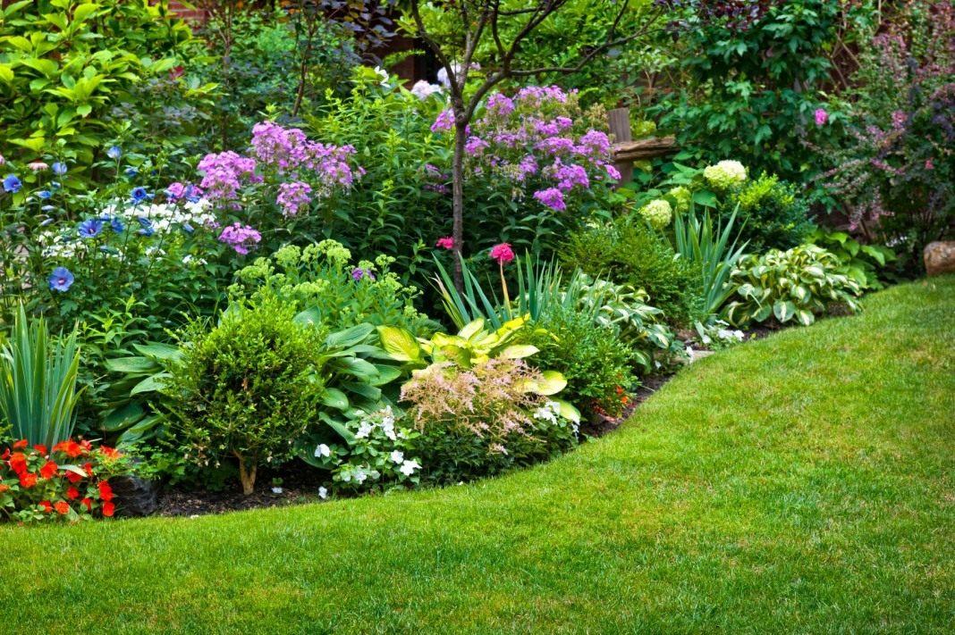 Растение аконит - ядовитый обитатель сада