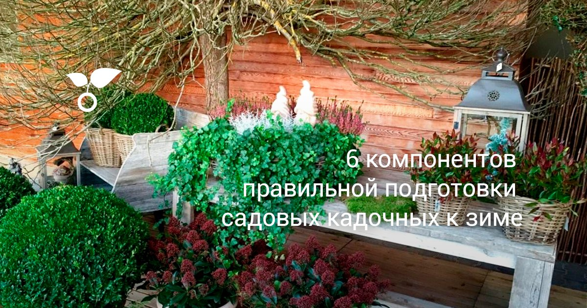 Многолетние растения в контейнерных композициях