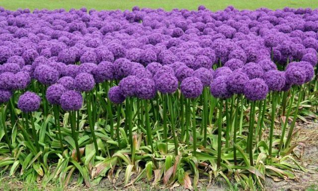 Фото какие цветы цветут осенью 109