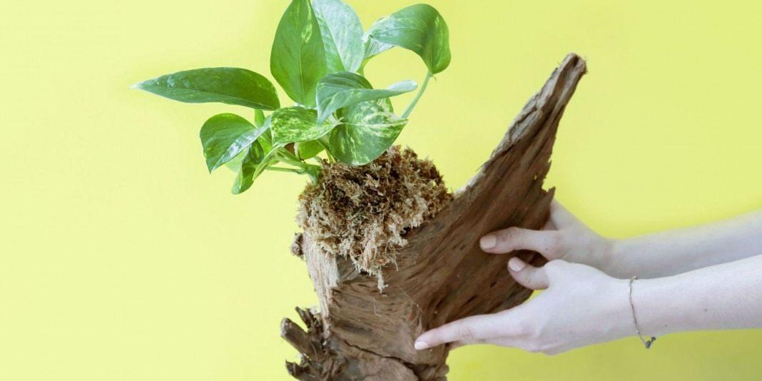 Фото деревьев для декора своими руками