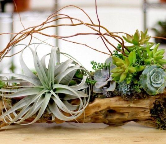 Рутарий для комнатных растений