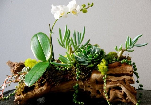 Рутарий из орхидеи и суккулентов