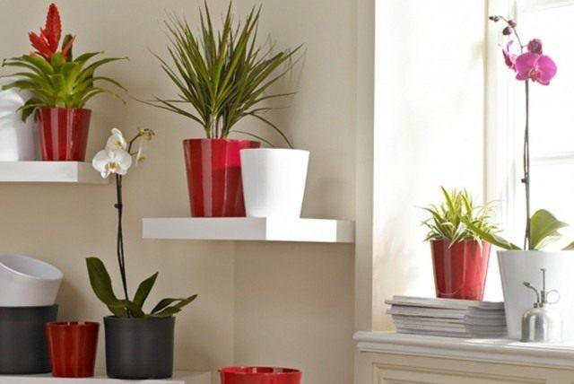 Комнатные растения - живые фильтры