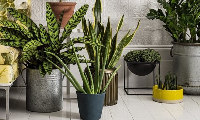 Растения очищающие воздух