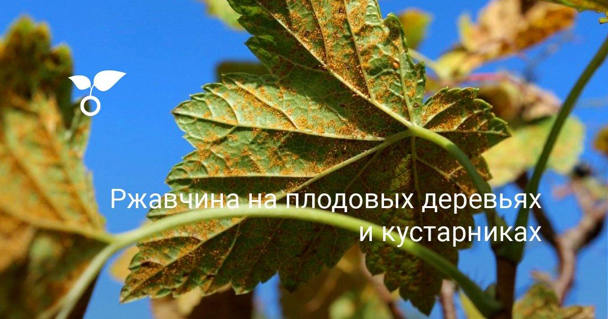 Болезни мандарина - рак ржавчина листьев плесень точки видео