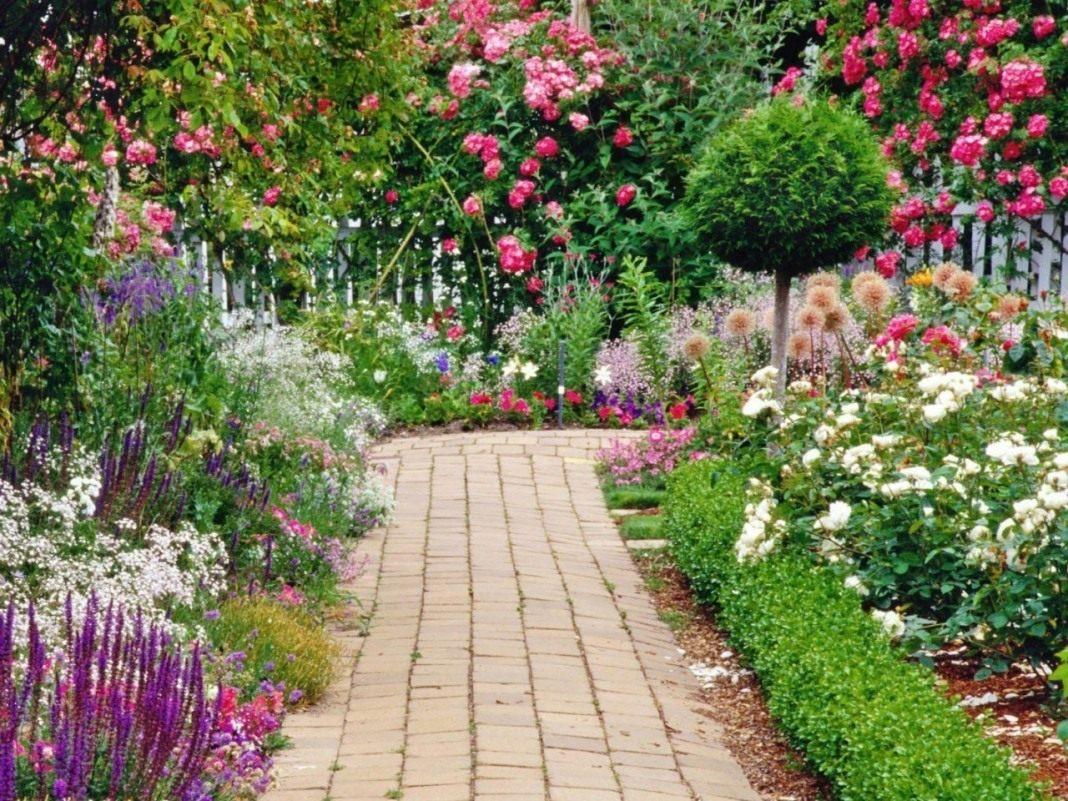 Цветы приусадебные фото и названиями