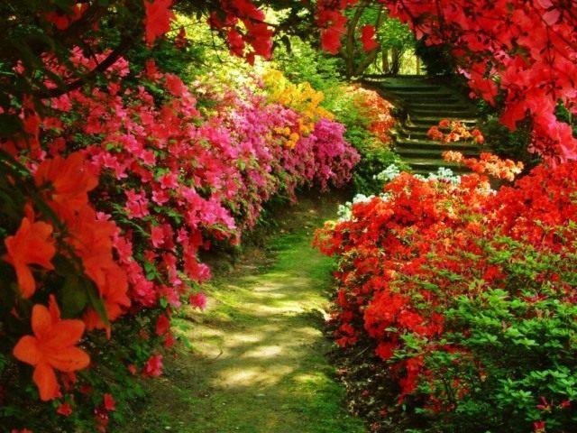 Алея цветотерапии в саду