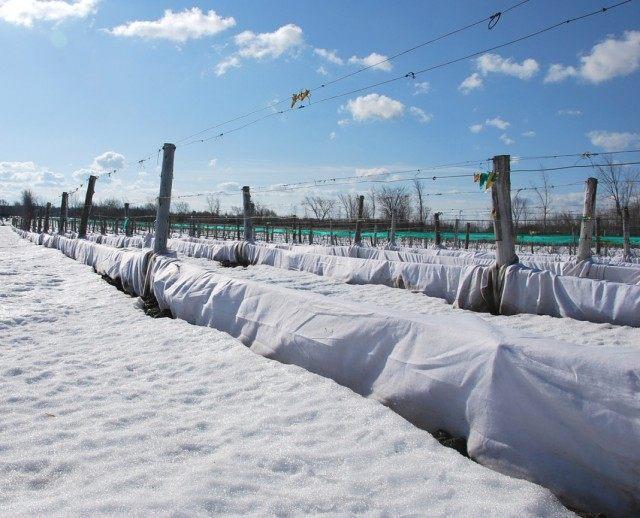 Зимнее укрытие винограда