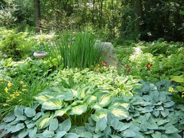 Цветник в зелёных тонах из декоративно-лиственных растений