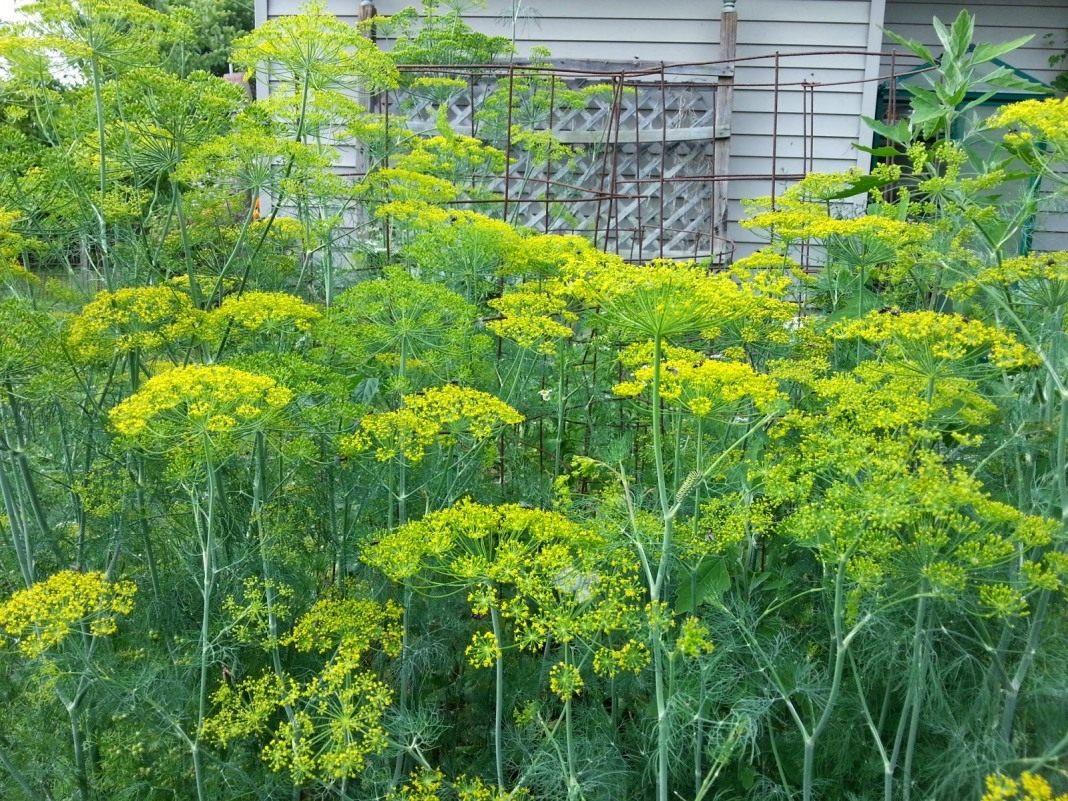 зеленое мыло инструкция по применению комнатные растения